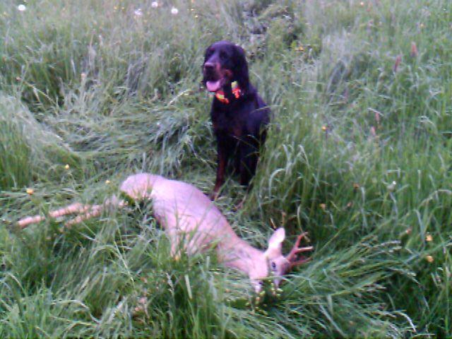 Entfernungsmesser Jagd Forum : Pirsch forum erster bock die jagd ist nun eröffnet