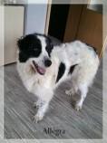 Hunde aus Italien suchen dringend Plätze!!! Ein ganzes Leben im Canile! - Seite 3 10054083sh
