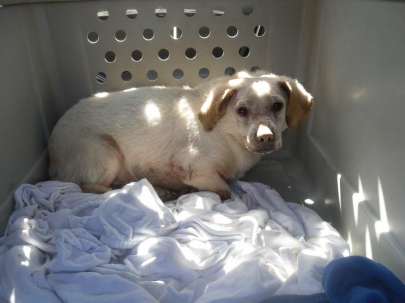 Hunde aus Italien suchen dringend Plätze!!! Ein ganzes Leben im Canile! - Seite 3 10059328fj