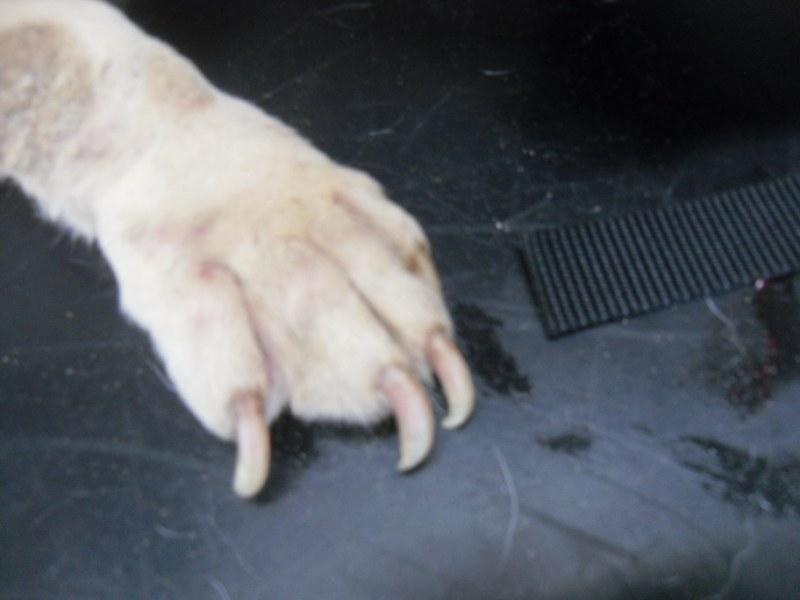 Hunde aus Italien suchen dringend Plätze!!! Ein ganzes Leben im Canile! - Seite 3 10059331qh