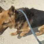 Hunde aus Italien suchen dringend Plätze!!! Ein ganzes Leben im Canile! - Seite 3 10122885mh