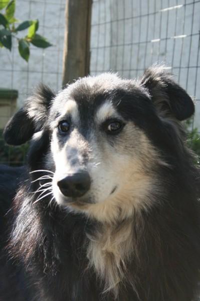 Hunde aus Italien suchen dringend Plätze!!! Ein ganzes Leben im Canile! - Seite 3 10131555ge