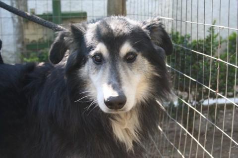 Hunde aus Italien suchen dringend Plätze!!! Ein ganzes Leben im Canile! - Seite 3 10131556vl
