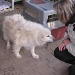 Hunde aus Italien suchen dringend Plätze!!! Ein ganzes Leben im Canile! - Seite 3 10132099wf