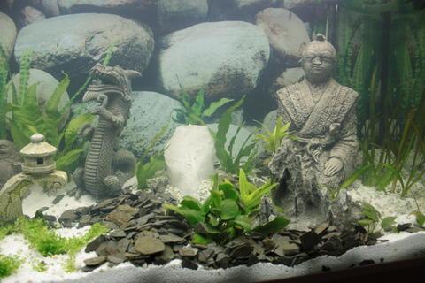 aquarium asiatisch