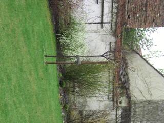 Clematis zu blutpflaume bitte um eure ideen seite 1 for Gartengestaltung um einen baum