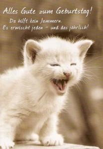 Bilder Geburtstag Mit Katzen Gloriarerelist Site