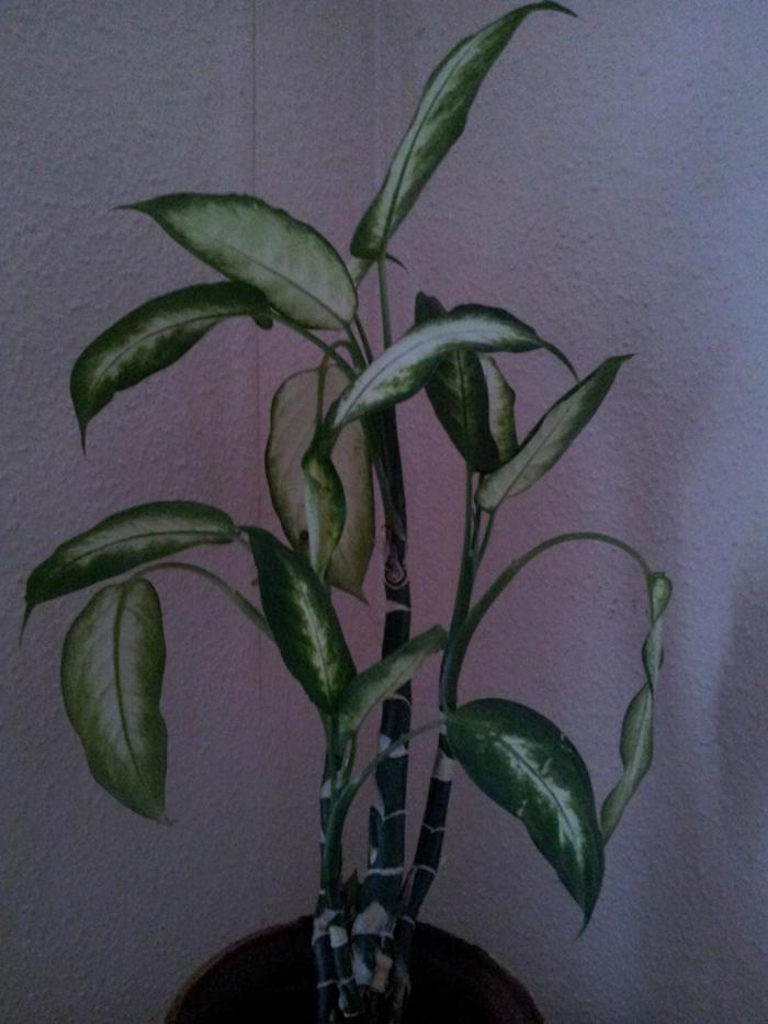 Liste zimmerpflanzen giftig und ungiftig seite 12 - Zimmerpflanzen giftig ...