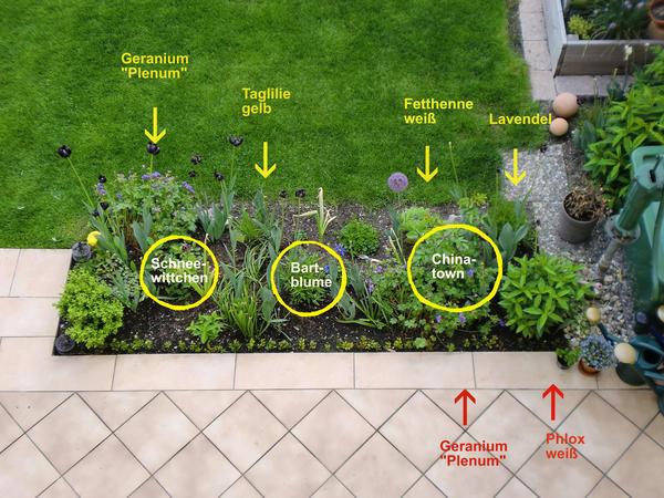 Bitte ideen f rs terrassenbeet mein sch ner garten forum for Garten bepflanzen ideen
