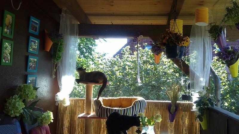 wie habt ihr euren balkon gestaltet? - seite 3 - katzen forum, Gartenarbeit ideen