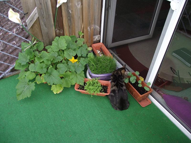 welche pflanzen auf balkon seite 6 katzen forum. Black Bedroom Furniture Sets. Home Design Ideas