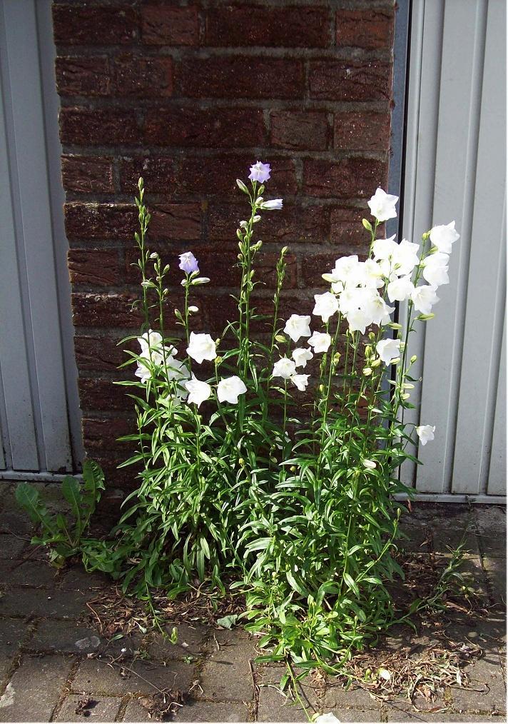 Neuer Garten - welche Pflanzen sind das? | wer-weiss-was.de