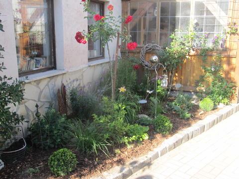 hoch oder kaskadenstamm f r meinen vorgarten seite 1 rund um die rose mein sch ner garten. Black Bedroom Furniture Sets. Home Design Ideas