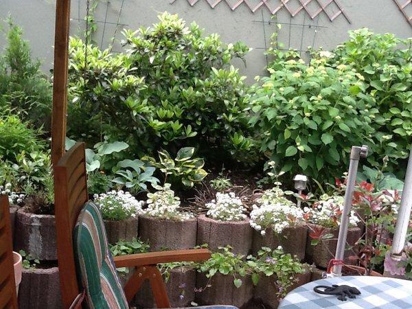 pflanzringe bepflanzen mein sch ner garten forum. Black Bedroom Furniture Sets. Home Design Ideas
