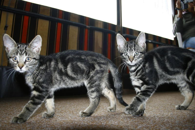 Katzen Forum - Warum zwei Katzen besser sind als eine!