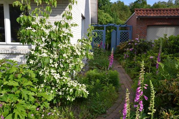 ideen zur gestaltung eines schmalen gartenstreifens gesucht; edit, Garten und Bauen