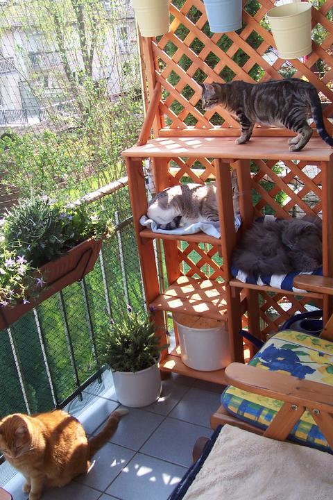 aussichtsplateaus f r balkon ideen gesucht seite 3 katzen forum. Black Bedroom Furniture Sets. Home Design Ideas