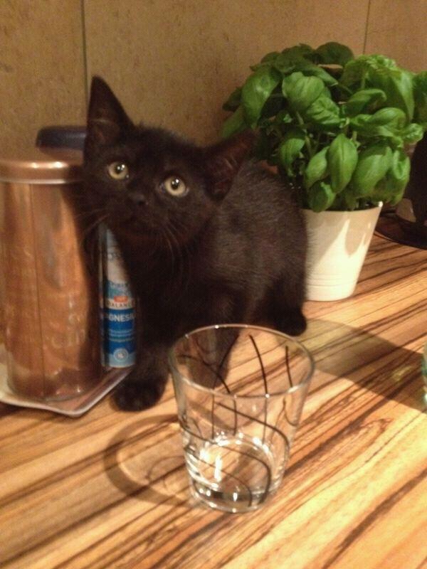 Schwarze Babykatze Sucht Dringend Ein Zuhause Katzen Forum