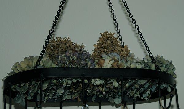 Hortensien Trocknen hortensienblüten trocknen mein schöner garten forum