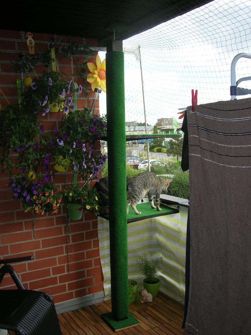 hoher outdoor kratzbaum gesucht oder tipps f r eigenbau seite 2 katzen forum. Black Bedroom Furniture Sets. Home Design Ideas