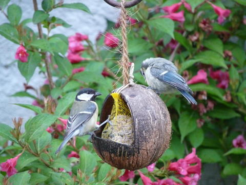Vogelfütterung Im Sommer