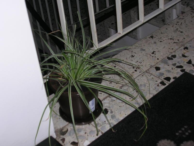 was ist das f r eine pflanze giftig katzen forum. Black Bedroom Furniture Sets. Home Design Ideas