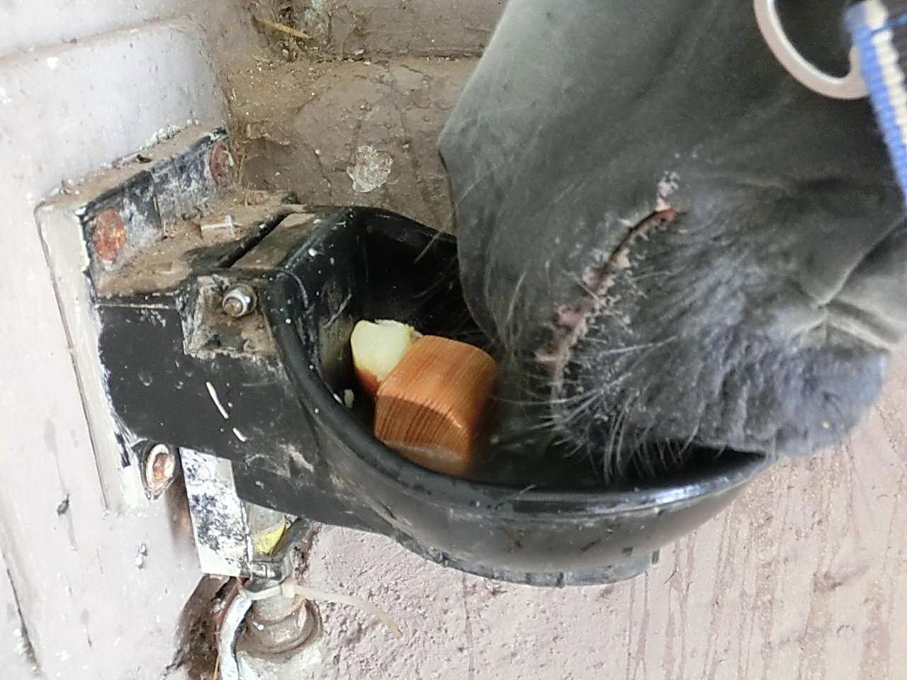 Buschtaxi.net • Problem mit Saufen: Pferd nimmt Tränke nicht an