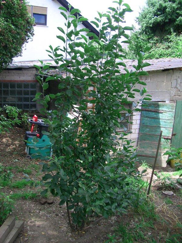 Minig rtchen 2012 teil 2 seite 176 gartengestaltung for Gartengestaltung john
