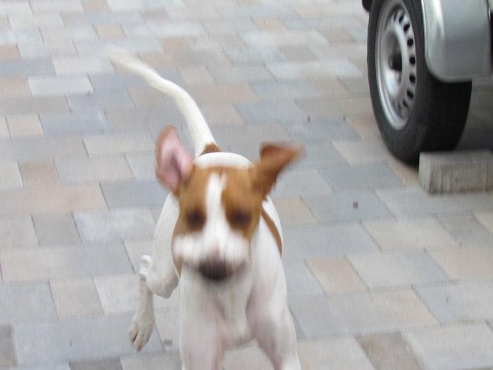 Bella - ehemals Emma - Seite 3 11459180rc