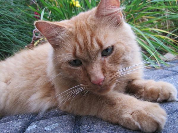 Eigenarten von katzen teil 10 sommer 2012 page 154 for Aw zeitschrift