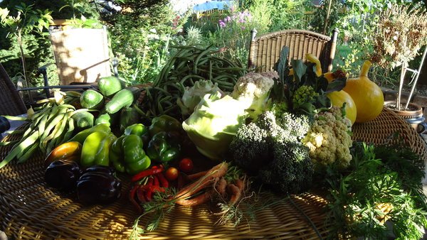 wie und was w chst in eueren gem sebeeten von der anlage. Black Bedroom Furniture Sets. Home Design Ideas