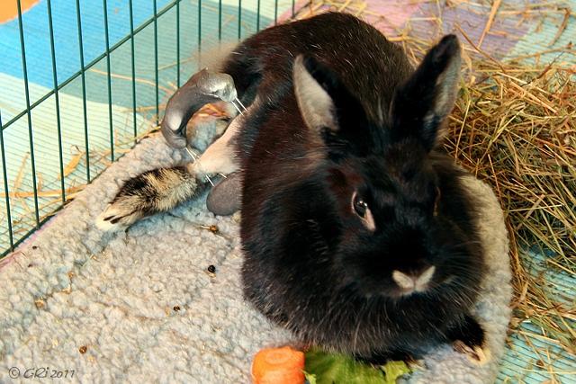 knochenbr che amputationen bei kaninchen kaninchenraum liebe kennt kein handicap. Black Bedroom Furniture Sets. Home Design Ideas