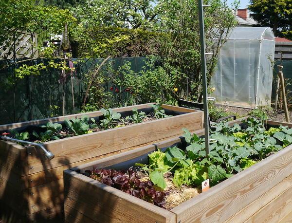 Tomaten im Gewächshaus, sinnvoll? - Seite 1 - Gartenpraxis - Mein ...