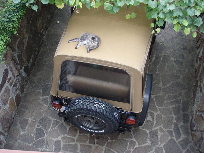 Gatto-Jeep 11982935ba