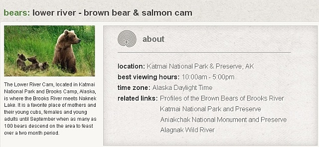 Seite drucken - Bären / Nationalpark in Alaska