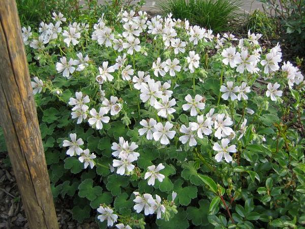 Kletterbogen Für Pflanzen : Brauche hilfe bei der bepflanzung so weit sind wir schon