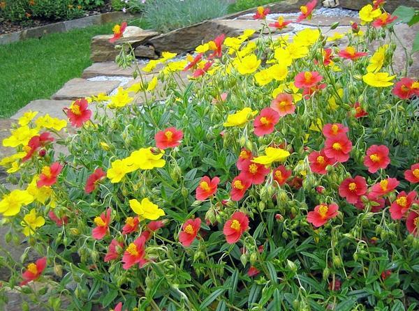 Kletterbogen Pflanzen : Brauche hilfe bei der bepflanzung so weit sind wir schon