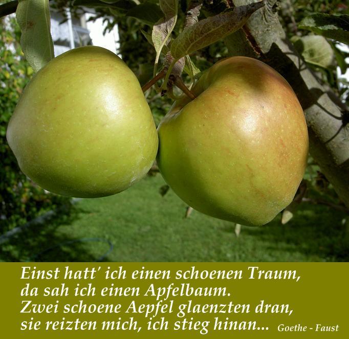 Rund um den Apfel   Ernährung von A   Z   Bäuerinnentreff