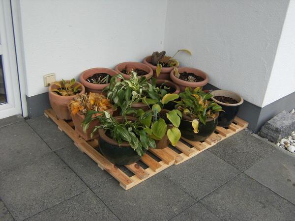 Kubel Winterfest Machen Mein Schoner Garten Forum
