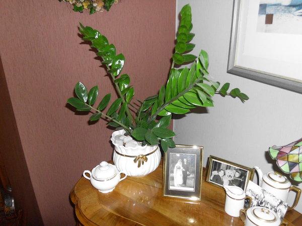 Pflanzen Die Viel Wasser Brauchen
