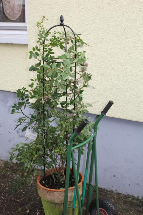 rankhilfe f r rosen auf dem balkon mein sch ner garten forum. Black Bedroom Furniture Sets. Home Design Ideas