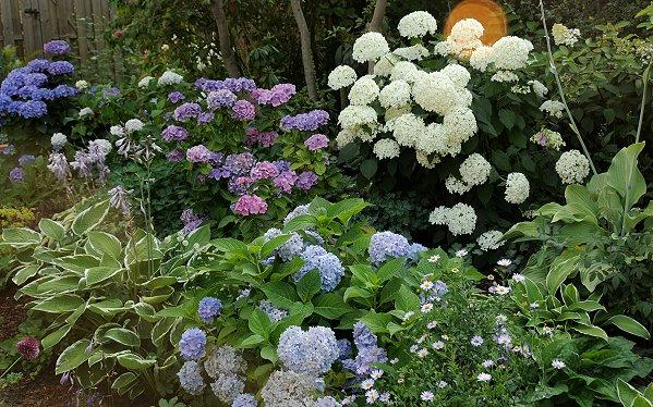 1000 images about vorgarten nordseite on pinterest hydrangeas search and shades. Black Bedroom Furniture Sets. Home Design Ideas