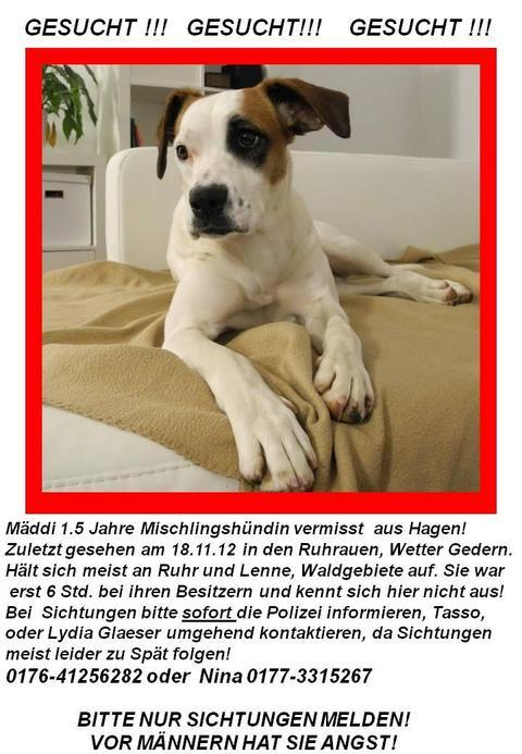 Hündin entlaufen in Hagen 12541650es