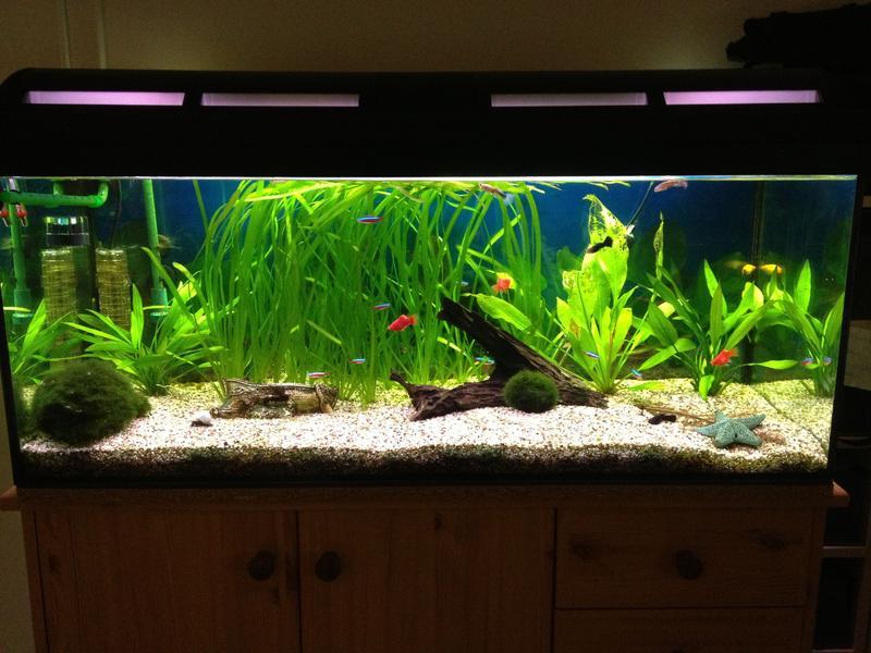 garnelen allgemein garnelen ja oder nein aquarium forum. Black Bedroom Furniture Sets. Home Design Ideas