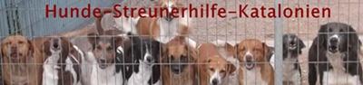 Seit 2005 vermittteln wir die Hunde des spanischen Tierschutzvereins!  Wir sind eine Gruppe von derzeit in Deutschland fünf aktiven ehrenamtlichen Privatpersonen.