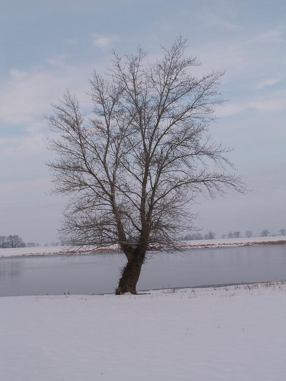 Bilder der Elbe 12789588ko
