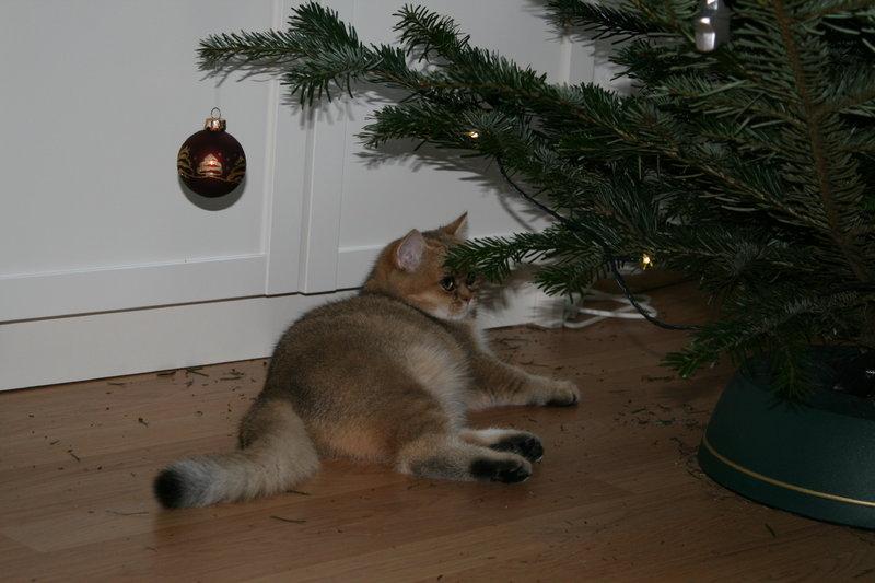 kriegen eure katzen weihnachtsgeschenke seite 17. Black Bedroom Furniture Sets. Home Design Ideas