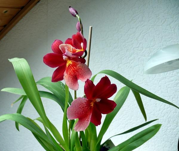 die sch nsten orchideen bilder pictures to pin on pinterest. Black Bedroom Furniture Sets. Home Design Ideas