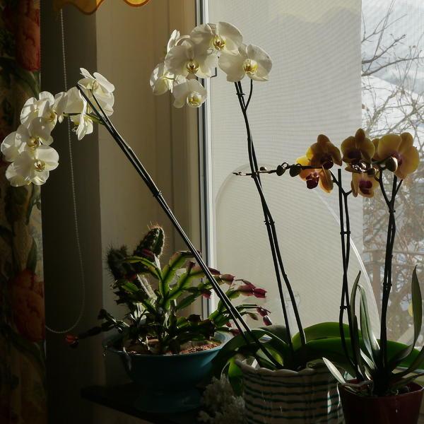 die sch nsten orchideen bilder seite 7 foto treff. Black Bedroom Furniture Sets. Home Design Ideas