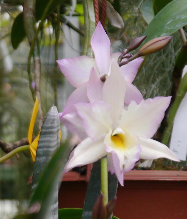die sch nsten orchideen bilder seite 8 foto treff. Black Bedroom Furniture Sets. Home Design Ideas